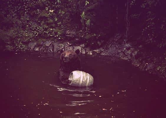Cesky Krumlov's bear moat